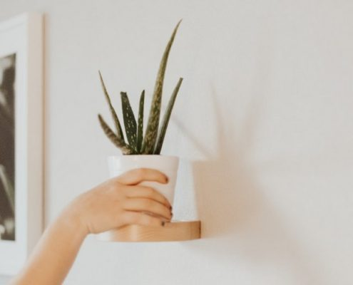 Όσα χρειάζεται να ξέρεις για να καλλιεργήσεις aloe vera στο σπίτι