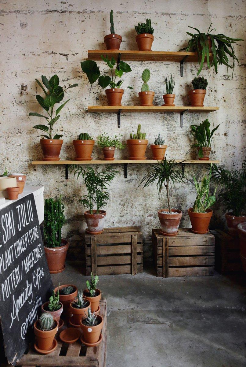 Όσα χρειάζεται να ξέρεις για να καλλιεργήσεις aloe vera