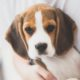 Αν αγαπούσαμε πραγματικά το wellness θα παίρναμε τον σκύλο μας κάθε μέρα στη δουλειά