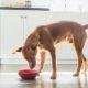 Αν ο σκύλος σου τρώει σαν να μην πρόκειται να ξαναδεί φαγητό στη ζωή του, χρειάζεσαι αυτό το item