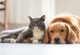 Αποκαλύφθηκε ποια είναι η μεγάλη διαφορά μεταξύ dog και cat lovers
