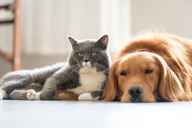 Αποκαλύφθηκε η μεγάλη διαφορά μεταξύ dog και cat lovers