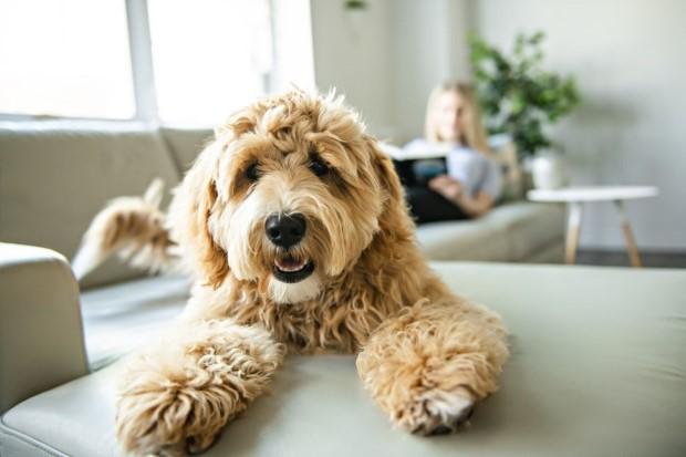 Αυτό το account με σκυλιά που δουλεύουν απ'το σπίτι είναι ακριβώς ό,τι χρειαζόμασταν στη ζωή μας