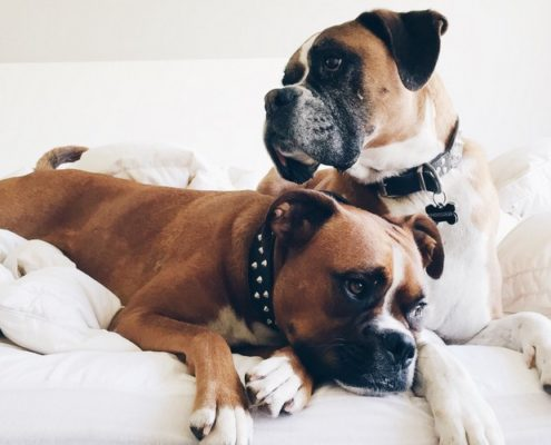 Γιατί τα νεαρά σκυλιά μοιάζουν αρκετά με τους εφήβους;