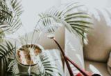 Γιατροί στη Μεγάλη Βρετανία πιστεύουν πως τα φυτά είναι ένα καλό όπλο απέναντι στην κατάθλιψη