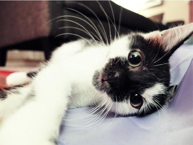 Για πόσο μπορείς να αφήσεις τη γάτα σου μόνη στο σπίτι;