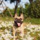 Είχες σκεφτεί ότι και ο σκύλος σου μπορεί να έχει ανοιξιάτικες αλλεργίες;