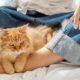 Η γάτα σου τελικά σου δίνει μερικά πολύ σημαντικά μαθήματα για τις σχέσεις