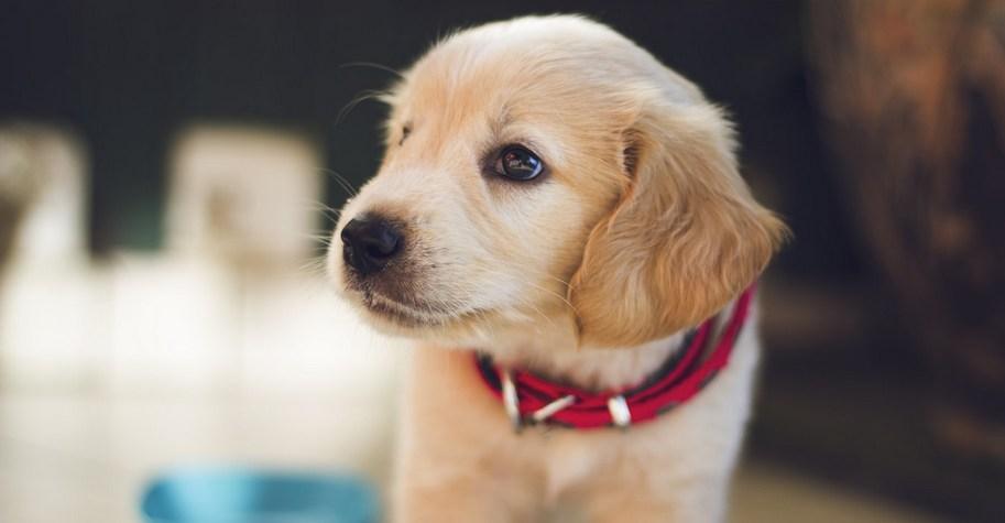 Η indie boutique του σκύλου μας έχει ένα από τα πιο όμορφα instagram accounts