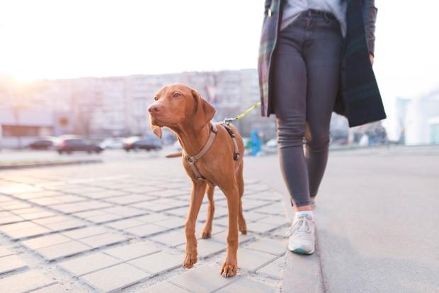 Οι αλλαγές που θα φέρουν στη ζωή σου 30 λεπτά περπάτημαΟι αλλαγές που θα φέρουν στη ζωή σου 30 λεπτά περπάτημα