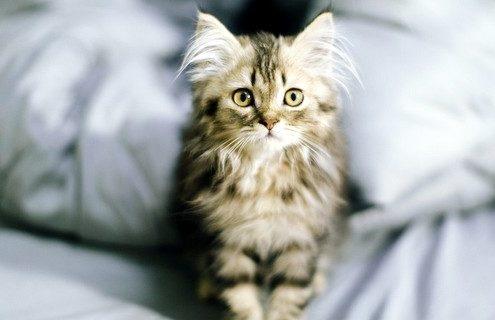 Οι πιο κοινές ανακρίβειες και μύθοι γύρω από τις γάτες