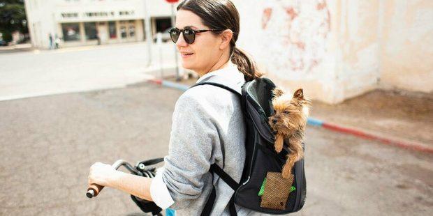 Ο σκύλος σου μπορεί να σου δώσει κάποια σημαντικά μαθήματα στην καραντίνα