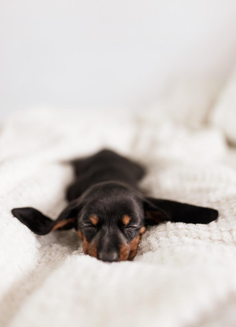 Πως θα καταλάβεις ότι ο σκύλος σου κοιμάται όσο πρέπει