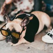 Πόσο κινδυνεύει ο σκύλος σου από τον ήλιο;