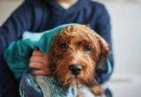 Τελικά πόσο συχνά πρέπει να κάνεις μπάνιο τον σκύλο σου;