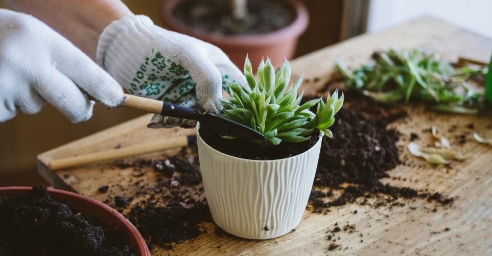 Πώς και πότε να μεταφυτεύσεις ένα φυτό σε άλλη γλάστρα