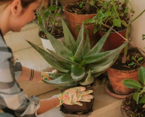 Πώς να σώσεις τα ταλαιπωρημένα φυτά σου