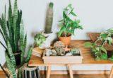 Συγγνώμη, αλλά τα φυτά σου δεν καθαρίζουν την ατμόσφαιρα στο σπίτι σου