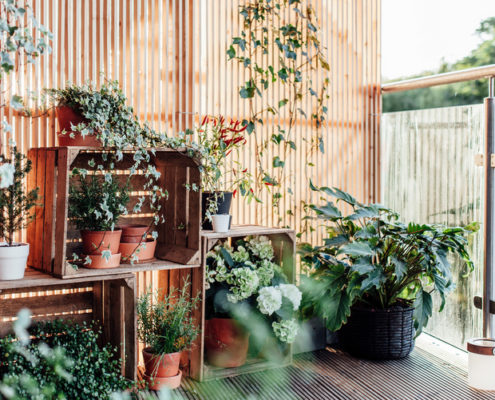 Τα αρχικά tips που χρειάζεσαι πριν μετατρέψεις μια γωνία του σπιτιού σου σε κήπο
