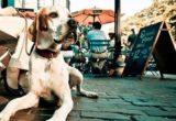 Τι να κάνεις και τι να αποφύγεις όταν στη βόλτα πλησιάσει εσένα και τον σκύλο σου ένα σκυλάκι χωρίς λουρί