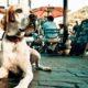 Τι να κάνεις αν πλησιάσει εσένα και τον σκύλο σου στη βόλτα ένας σκύλος χωρίς λουρί