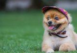Τι πρέπει να κάνεις για να σταματήσει ο σκύλος σου να τρώει γρασίδι στη βόλτα