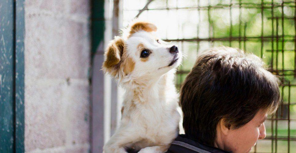 Το 1 πράγμα που ξεχνάμε οι περισσότεροι να προσφέρουμε σε ένα καταφύγιο ζώων