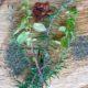 Βότανα και αρωματικά φυτά: Πως να τα καλλιεργήσεις με επιτυχία στο σπίτι σου