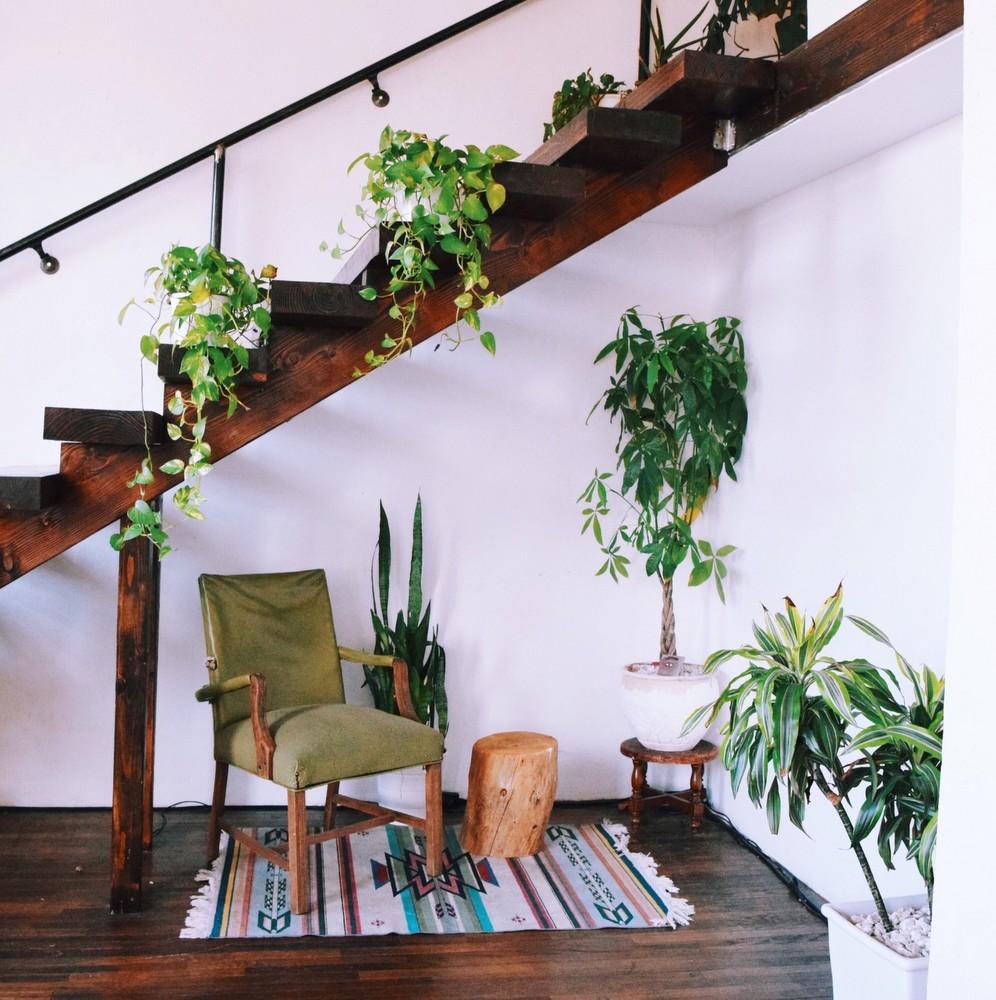 Είναι σωστό να αλλάζεις συνέχεια θέση στα φυτά σου;