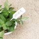 Η μέντα είναι το αρωματικό φυτό που θέλεις να έχεις στο σπίτι σου
