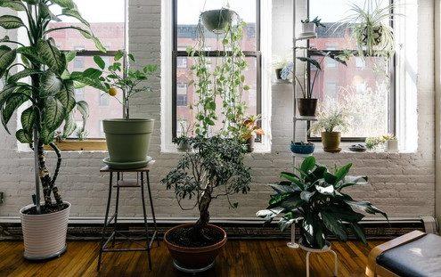 7 φυτά που μπορείς να έχεις σε ένα σπίτι με γάτα