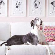 5 tricks διακόσμησης του σπιτιού σου αν έχεις σκύλο