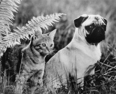 10 εξαιρετικές σκυλοταινίες για να δείτε αυτή την εορταστική περίοδο