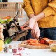 10 λαχανικά που επιτρέπεται να φάει ο σκύλος μας