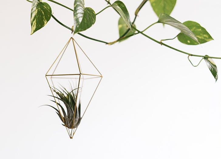 10 φυτά για κρεμαστρές γλάστρες που θα αναβαθμίσουν τον χώρο σου