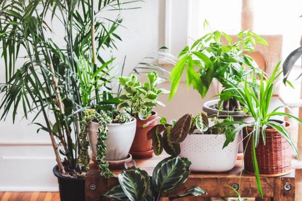 10 cat-friendly φυτά για να ξέρεις τι ακριβώς να ψάξεις