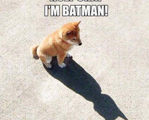 10 memes που αποδεικνύουν πως τα σκυλιά είναι moodmakers