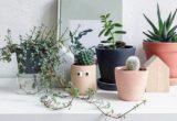 10 millennial λόγοι που δεν μπορείς να κρατήσεις ούτε ένα φυτό ζωντανό