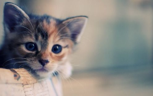 12 quotes για τις γάτες που θα κάνουν κάθε cat lover να ταυτιστεί