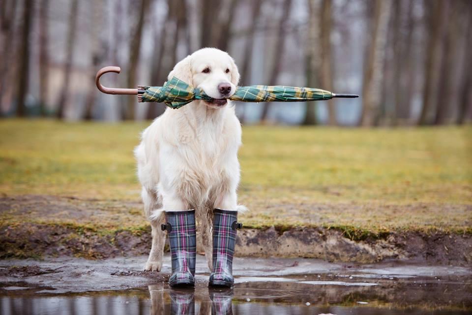 4a15546327c8 Τα προβλήματα του σκύλου σου που μπορείς να προλάβεις - Savoir Ville