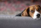 Οι σκύλοι έχουν καλύτερη μνήμη από ό,τι νομίζουμε