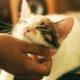 4 σημάδια ότι η γάτα σου ίσως έχει το άγχος του αποχωρισμού