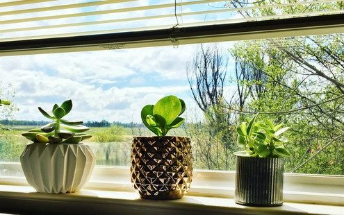 4 σημάδια ότι το φυτό σου θέλει απεγνωσμένα μια μεγαλύτερη γλάστρα