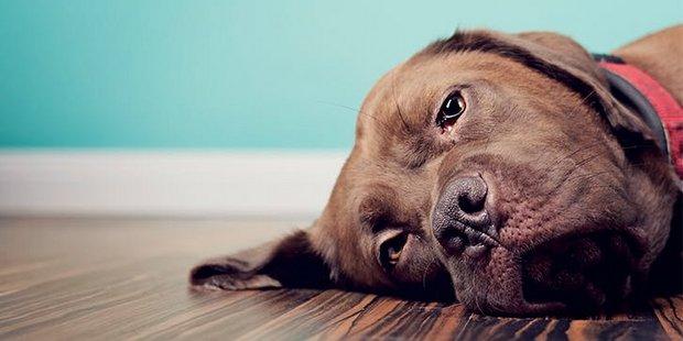 5 σημάδια ότι ο σκύλος σου μπορεί να έχει κατάθλιψη