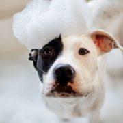 5 τρόποι με τους οποίους ο σκύλος σου σού δείχνει πως τον έχεις παραμελήσει