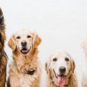 5 τρόποι να γίνεις ένας eco-friendly κηδεμόνας σκύλου