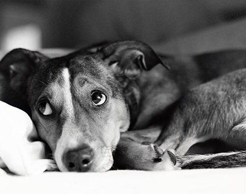 5 φυσικοί τρόποι να ηρεμήσεις έναν σκύλο που έχει άγχος