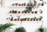 5 φυτά εσωτερικού χώρου με τροπικά vibes