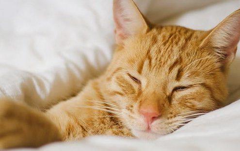6 λόγοι που θα σε πείσουν να κοιμάσαι με τη γάτα σου χωρίς τύψεις