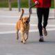 6 tips που πρέπει να θυμάσαι αν ο σκύλος είναι ο jogging buddy σου